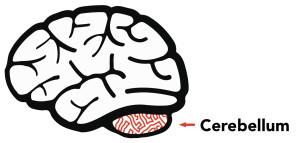 cerebell_presentation5 kopier